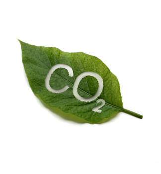Leaf with CO2 cut out